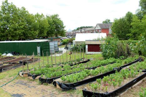 Bennett Farm12